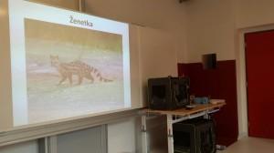 ZOO Zájezd - drobní savci z Afriky (9)