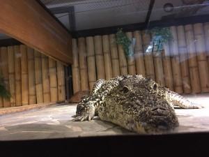 Krokodýlí ZOO 3.A + 3.B  (4)