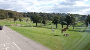 Safari v Longleat (12)