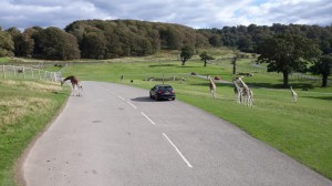 Safari v Longleat (13)