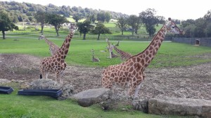 Safari v Longleat (4)