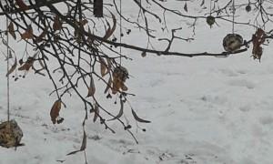 Zobání pro ptáčky (13)